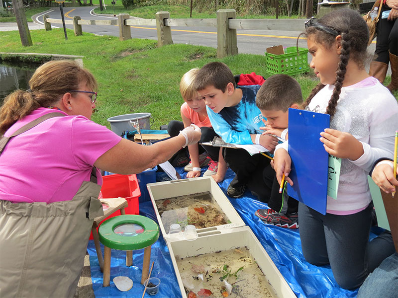 Young Ecologists at Work